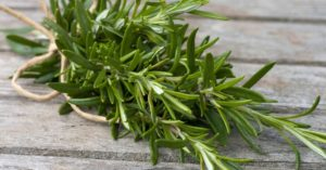 Rosemary herbal actions
