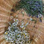 Town Farm Tonics Herbal Nervines - Calming Nervines - Herbal Actions