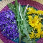dandelion greens for spring wellness made with elderberry syrup vinaigrette for immune system support