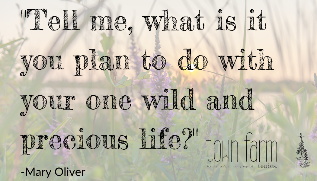 tell me what is it you plan to do with your one wild and precious life mary oliver quote from poem