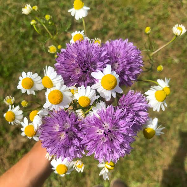chamomile and onion blossom bouquet