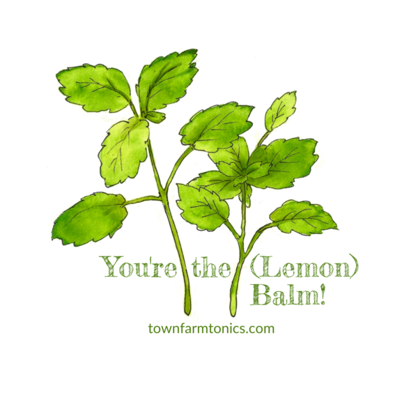 you're the lemon balm herbal pun sticker for laptop, water bottle or car